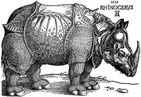 Rhinocerys